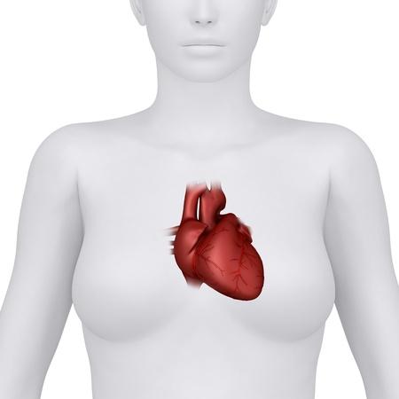 cardiac: Thorax organ Stock Photo