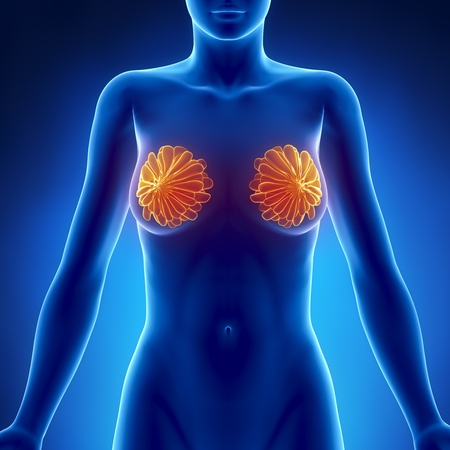 cancer x ray: Breast x-ray view Stock Photo