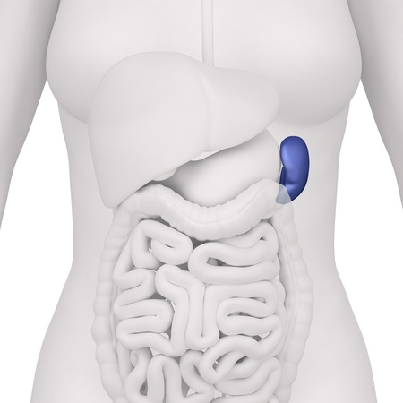 colon: Anatomy of abdomen Stock Photo