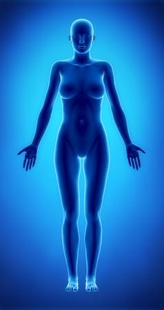female anatomy: Standing woman