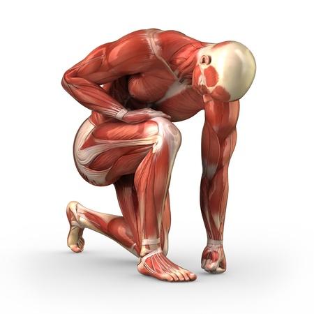 anatomie: Man zonder huid geknield op de grond