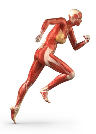 athletic body: Anatomy of human muscles Stock Photo