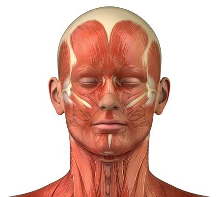 anatomie mens: Anatomie van het hoofd spieren