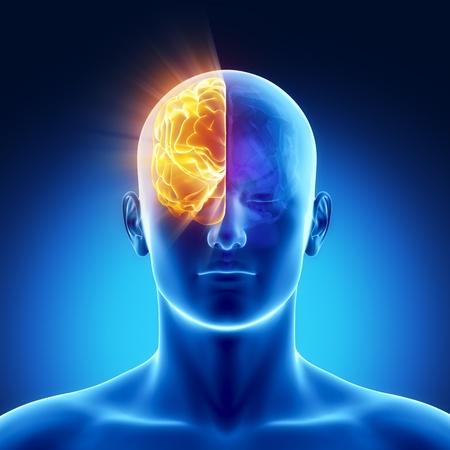 X 線ビューの人間の臓器の男性の解剖学 写真素材