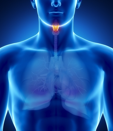 thyroid: Male anatomy of human organs in x-ray view Stock Photo