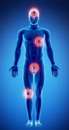ovaire: Anatomie masculine des organes humains en vue de rayons X