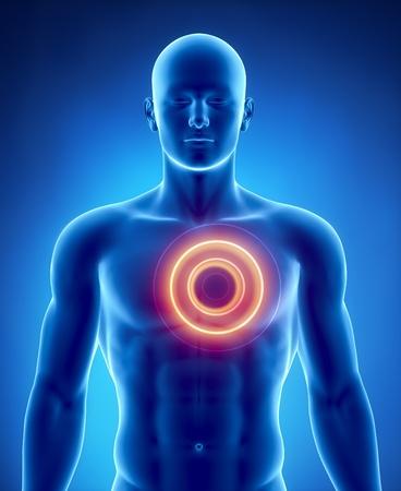 dolor de pecho: Anatomía masculina de órganos humanos en vista de rayos x