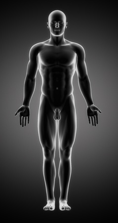 Male anatomy of human organs in x-ray view photo