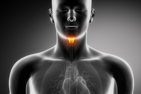 thyroid: Male anatomy of human larynx in x-ray view Stock Photo