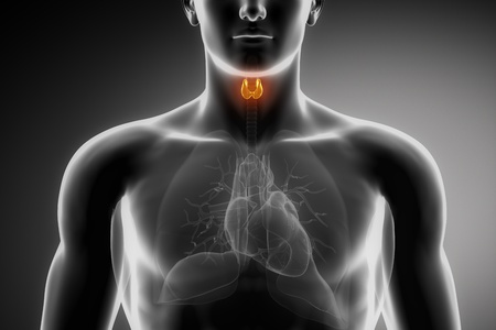 Male anatomy of human thyroid in x-ray view photo