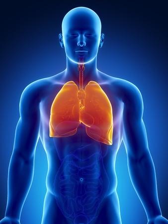 aparato respiratorio: Anatomía masculina del sistema respiratorio humano en vista de rayos x Foto de archivo