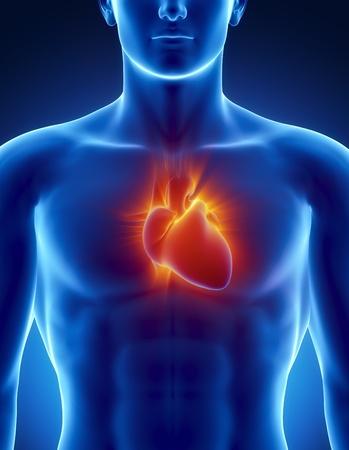 ataque al corazón: Anatomía masculina de corazón humano en la vista de rayos x