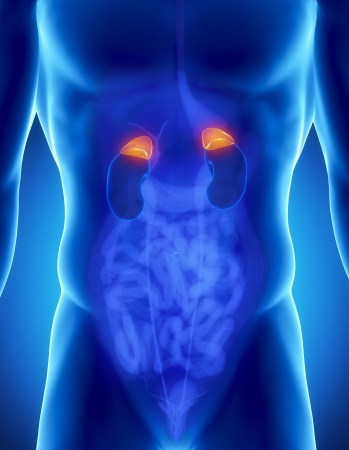 lateral: Anatom�a masculina de suprarrenal humana en vista de rayos x Foto de archivo