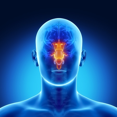 frontal: Male anatomy of human brain stem in x-ray view Stock Photo