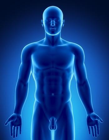hombre desnudo: Anatomía masculina de órganos humanos en vista de rayos x