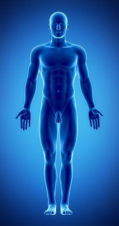 naked  body: Male anatomy of human organs in x-ray view Stock Photo