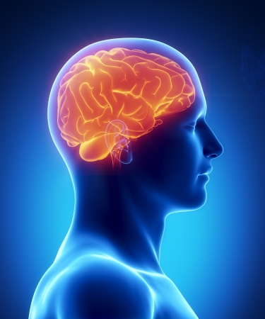 human head: Male anatomy of human brain in x-ray view Stock Photo
