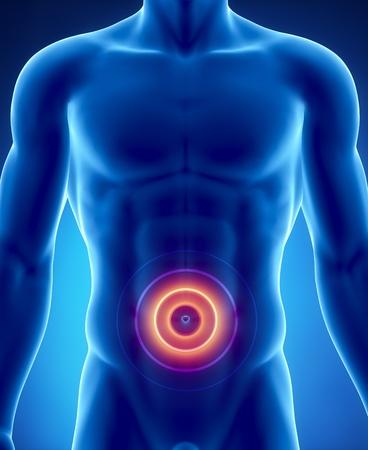 dolor de pecho: Anatomía masculina de digestivo humano en vista de rayos x