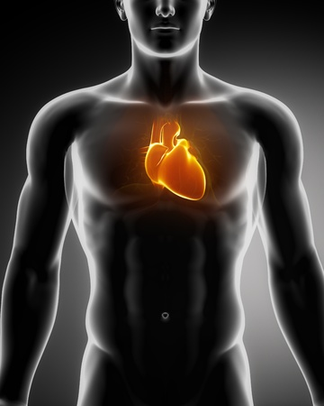 attacks: Male heart anatomy of human organs in x-ray view Stock Photo