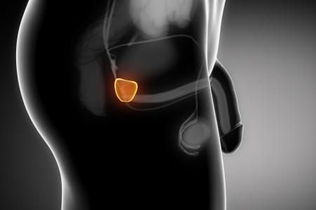 ovaire: L'anatomie de la prostate Homme d'organes humains en vue de rayons X Banque d'images