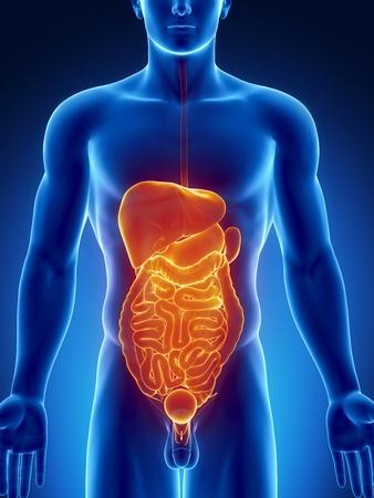 pankreas: M�nnliche Anatomie des menschlichen Bauchorgane in blau, orange, x-ray ansehen
