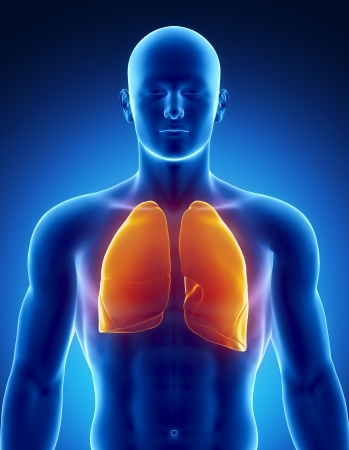 human anatomy: Male LUNGS anatomy of human organs in x-ray view Stock Photo