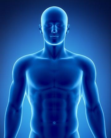 chest x ray: Anatomia maschile di organi umani in vista a raggi X