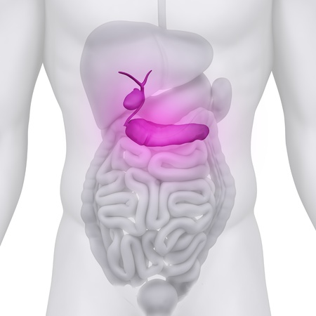 pancreas: Homme illustre l'anatomie du canal chol�doque sur blanc