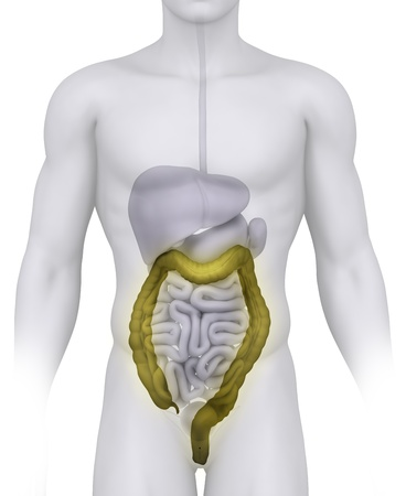 Male COLON anatomy illustration on white Stock Illustration - 10611429