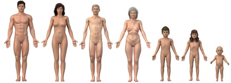 Whole family in anatomical position - any bust also as single image available Stock Photo - 11295980