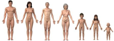Intera famiglia in posizione anatomica - qualsiasi busto anche come singola immagine disponibile
