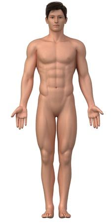 hombre desnudo: Hombre desnudo en posición anatómica aislada - toda la familia también está disponible