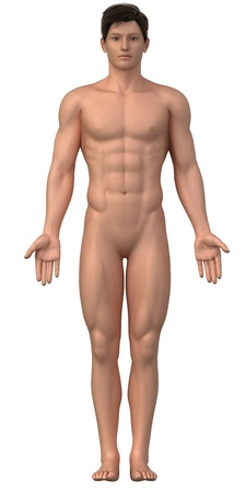 Naked man in anatomical position isolated - whole family also available