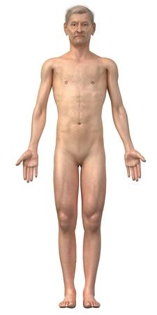 hombre desnudo: Hombre desnudo en posición anatómica de edad aislados - toda la familia también está disponible Foto de archivo