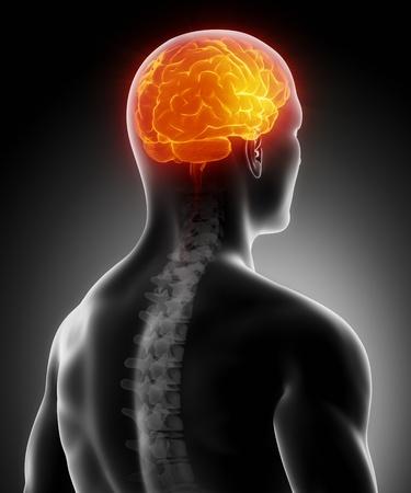 cervicales: Cerebro que brilla intensamente con la columna vertebral Foto de archivo