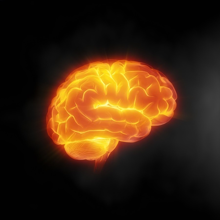 medical scanner: Human brain