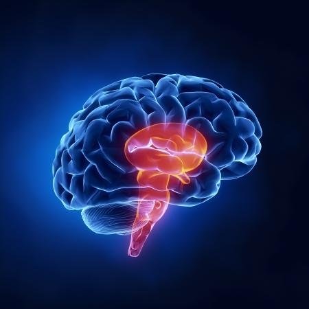 tallo: Tallo parte - El cerebro humano, en vista de rayos X Foto de archivo