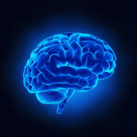X 線ビューで人間の脳