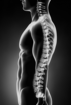 intervertebral disc: Human spine left lateral view Stock Photo