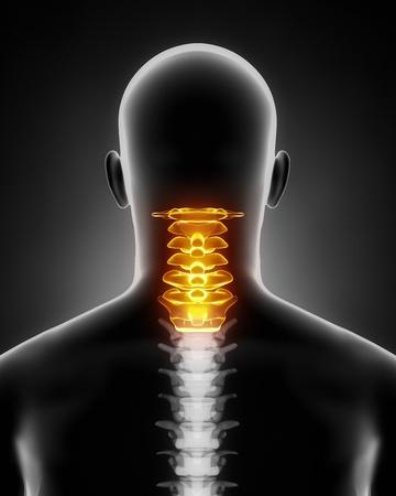 cervicales: Anatomía de la columna cervical posterior, vista