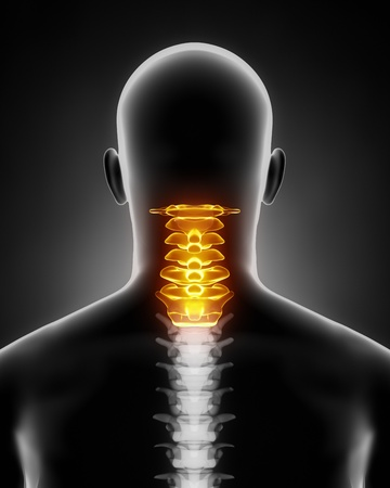 Cervical spine anatomy posterior view Stock Photo