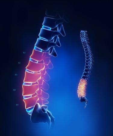 medula espinal: Anatom�a de la columna lumbar con detalle azul Foto de archivo