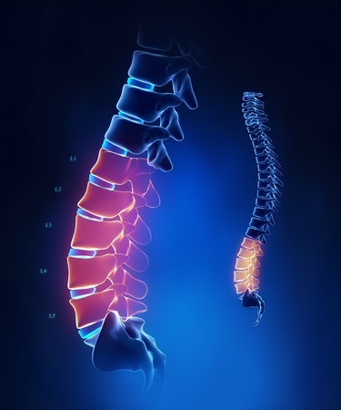 Lumbar spine anatomy in blue detail photo