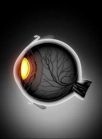 cornea: Human eye anatomy Stock Photo