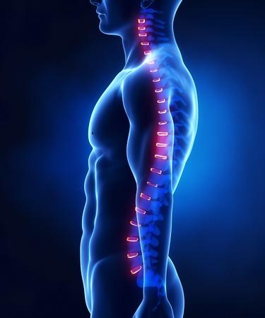 colonna vertebrale: Focalizzato in vertebre umane - disco intervertebrale