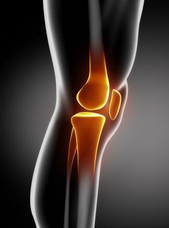 articulaciones: Anatomía de la rodilla humana vista lateral