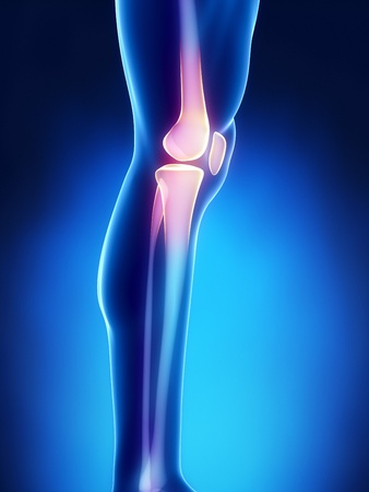 lateral: Human knee antomy with femur, tibia and fibula bones