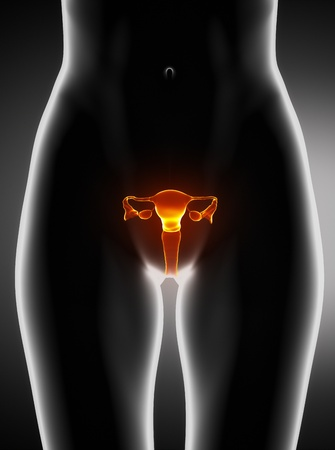 ovary: Female uterus anatomy anterior view Stock Photo