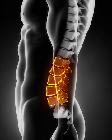 Lumbar spine anatomy lateral view Stock Photo - 12478439