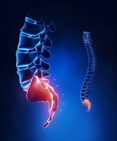 sacral: Spine sacrale regio anatomie in x-ray blauw